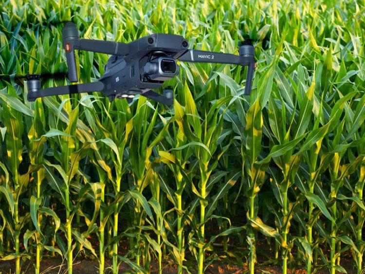Drone na agricultura: como ele pode ajudar na produção?
