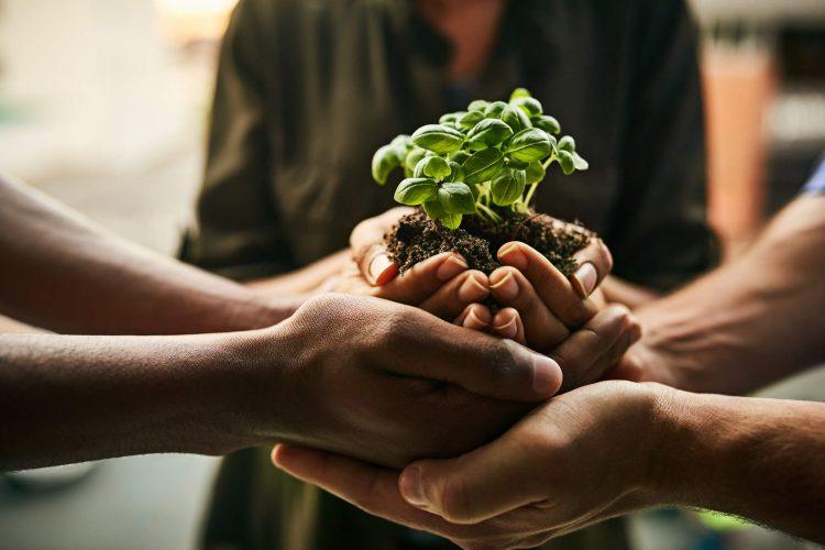 Aldo e sustentabilidade: entenda como trabalhamos essa questão